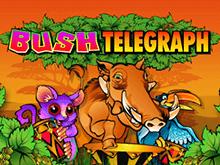 Азартная игра Лесной Телеграф