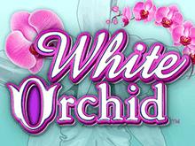 Азартная игра Белая Орхидея